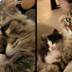 แมวแก่จรจัดมาเกือบทั้งชีวิต พบความสุขตอนบั้นปลาย จากการดูแลแมวน้อยกำพร้า