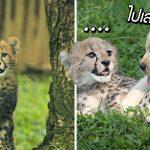 """เรื่องราวของ Emmett และ Cullen """"เสือชีต้าร์กับหมา"""" เป็นเพื่อนกันมาตั้งแต่เด็กยันโต"""
