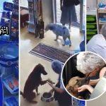 เภสัชกรนั่งทำแผลให้ 'สุนัขจรจัดแสนรู้' หลังมันเดินเข้าร้านยา แล้วโชว์แผลให้ดู