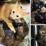 แมวและลูกแมวรวม 13 ตัว ถูกยัดในกรงแคบๆ โดยที่ทุกตัวดูแลเหมือนครอบครัวเดียวกัน