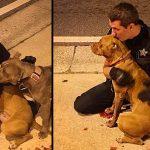 ตำรวจหนุ่มเข้าช่วยเหลือหมาพิตบูลล์บาดเจ็บ แถมอยู่เป็นเพื่อนจนมีคนมารับไปรักษา