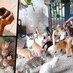 ครอบครัวชาวเวเนฯ เลี้ยงดูแมวกว่า 50 ตัว ทั้งๆ ที่พวกเขาเองก็แทบไม่มีอะไรเลย