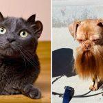 พบกับ 20 สัตว์ผู้มีเอกลักษณ์เฉพาะไม่ซ้ำใคร พลิกโลกหาก็มีแบบนี้แค่ตัวเดียว