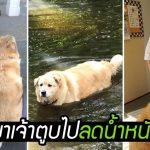 พี่หมาหนักเกือบ 80 กิโลกรัม อ้วนเกินจนเดินแทบไม่ได้ เจอคนช่วยลดจนชีวิตเปลี่ยน