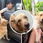 """พบเจ้า """"กังฟู"""" มะหมานักหยุดรถ ที่ทำให้สาวต้องจอดทักทายมันก่อนทำงานทุกวัน"""