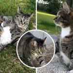 """ทาสแมวสาวแจ็กพอต ไปเที่ยวเจอ """"แมวอ้วน"""" อยู่ข้างบ้านเลย มันช่างดีต่อใจจริงจริ๊ง!!"""