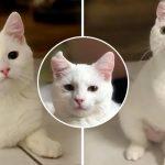 'Pink' อดีตแมวจรที่ถูกช่วยจากข้างถนน แฮปปี้กับชีวิตใหม่ แม้จะมีขาแค่ 3 ข้าง