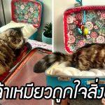 เหมียวชอบนอนในกระเป๋าเดินทางของแม่ แม่จึงทำเตียงกระเป๋าแสนสวยให้มันซะเลย
