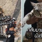 หญิงทาสแมว ฝากแมวจรตามแมวตัวเองกลับบ้านให้หน่อย สักพักกลับมาจริงด้วย!!