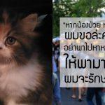 """อุทาหรเตือนใจทาส ซื้อลูกแมวจตุจักร พ่อค้าบอก """"ถ้าแมวป่วย ห้ามพาไปหาหมอ"""" !?"""