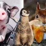 20 สัตว์โลกผู้เกิดมาพร้อมความเป็นนางแบบ-นายแบบ จะมุมไหน ก็รอดจ้าาา