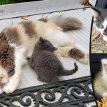 หญิงพบแมวจรมาเกิดลูกในกองฟืน เธอจึงพาพวกมันกลับบ้าน และมอบชีวิตที่ดีกว่าให้