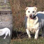 คนใจดีช่วย 'สุนัขแก่ถูกทิ้ง' ที่เร่ร้อนใกล้ทางรถไฟ และหาเจ้าของใหม่ให้มัน