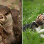 นิสัย 20 อย่างเกี่ยวกับสัตว์โลก ที่หากคุณได้รู้แล้วจะมองว่าพวกมันน่ารักยิ่งขึ้น
