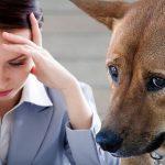 """นักวิจัยพบว่า สุนัขมีแนวโน้ม """"เครียดตามเจ้าของ"""" สูง ยิ่งสนิทมากยิ่งเครียดตามง่าย"""