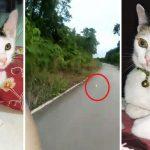 เรื่องราวชีวิตของ 'รันนิ่ง' น้องแมวนักวิ่งตาม จนทาสต้องใจอ่อนยอมพากลับบ้านจนได้
