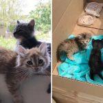 หนุ่มช่วยลูกแมว 3 ตัว ก่อนจะลงเอยด้วยการช่วยเพิ่มอีก 5 ตัว ที่ถูกแม่ซ่อนเอาไว้