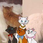 ครอบครัวแมวดูเหมือนการ์ตูนเรื่อง 'แมวเหมียวพเนจร' เปี๊ยบ อะไรจะบังเอิญขนาดนั้น