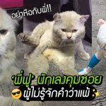 'พี่ฟู' เหมียวนักเลงคุมซอย ขยันไปมีเรื่องกับแมวซอยอื่นทุกวัน เจ็บได้ แต่แพ้ไม่ได้!!