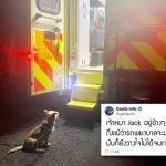หมาน้อยเป็นห่วงเจ้าของ เฝ้ามองเขาจากนอกรถพยาบาล เพื่อให้มั่นใจว่าเขาปลอดภัย