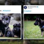 ทวิตเตอร์กรมตำรวจนิวซีแลนด์ แลดูเน้นความมุ้งมิ้ง 'โพสต์ภาพหมาบ่อยกว่าข่าว' อีก