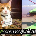 'อดีตแมวจร' ผันตัวเองเป็นนักโต้คลื่น ก่อนจะกลายเป็นเน็ตไอดอลที่ช่วยผู้คนทั่วโลก