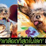 เชิญชมโฉมหน้าของผู้ครองตำแหน่ง 'หมาที่น่าเกลียดที่สุดในโลก' ประจำปี 2019