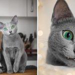 'Xafi กับ Auri' คู่หูรัสเซียนบลูผู้มีดวงตาสีเขียวมรกต ตัดกับขนสีเทาได้อย่างลงตัวสุดๆ