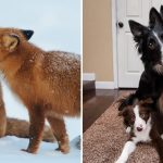 เปิดภาพ 'คู่รักในวงการสัตว์โลก' กับโมเมนต์สุดหวาน จนคนโสดแทบทนดูไม่ได้