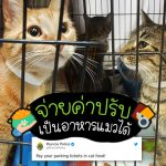 ตำรวจออกไอเดียดี ให้จ่ายค่าปรับเป็นอาหารแมวได้ เพื่อให้แมวจรอดอยากได้อิ่มท้อง