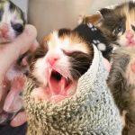 ลูกแมวถูกแม่ทิ้งตั้งแต่เกิด ได้คนใจดีช่วยเอาไว้ แถมมีเพื่อนใหม่ที่อาสาเป็นเบ๊ให้ด้วย