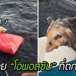 คู่รักบังเอิญเจอสัตว์ขนปุยลอยคอกลางทะเลสาบ จึงเข้าไปช่วยชีวิตมันเอาไว้