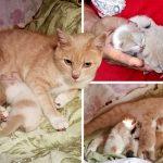 อาสาสมัครช่วยลูกแมวเอาไว้ได้ และยังช่วยตามหาแม่แมวให้มาอยู่กับพวกมันด้วย