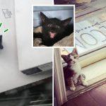 มนุษย์ช่วย 'ลูกแมวจรตัวน้อย' ที่กล้าเข้ามาขออาหาร แถมยังหาเพื่อนเล่นให้มันด้วย