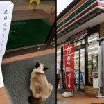 แมวจรมานอนหน้าร้าน 7-11 ในวันพิเศษ พนักงานสงสัยอาจเป็น ผจก. กลับชาติมาเกิด