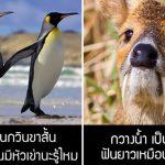 มาดู 14 ความรู้เกี่ยวกับสัตว์โลก ที่แปลกมากๆ จนแม้แต่ครูชีวะฯ ก็คงไม่รู้!!