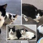 หญิงสาวให้ข้าวแมวจรมานานเป็นปี กลับมาอีกทีมันพาลูกมาฝากท้องเพิ่มด้วยอีกตัว