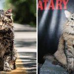 ผู้จัดรับเลี้ยง 'แมวจากศูนย์พักพิง' และปั้นให้เป็น 'นักแสดง' จนกลายเป็นที่จดจำทั่วโลก