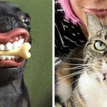 22 ภาพหลุดสุดฮาของเหล่าสัตว์เลี้ยง ที่จะทำให้คุณอารมณ์ดีไปตลอดทั้งวัน