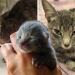 แม่แมวมือใหม่ดีใจมาก ที่หญิงสาวช่วยรับมัน และลูกเพียงตัวเดียวที่เหลืออยู่มาดูแล
