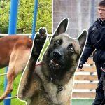 'หมาตำรวจ' ดังใหญ่ หลังโชว์ความสามารถ 'ปิดตาเดินบนเชือก' ได้อย่างน่าทึ่ง