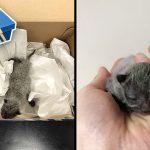 'ลูกแมวแรกเกิด' ถูกทิ้งในกล่องรองเท้า ร้องขอความช่วยเหลือ จนมีคนได้ยินเสียงของมัน