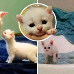'ลูกแมวหูหนวก' ชีวิตเปลี่ยน หลังถูกรับเลี้ยงโดยพี่เหมียวสองพี่น้องที่หูหนวกเหมือนกัน