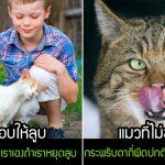 มาดู 14 สัญญาณที่บ่งบอกได้ว่า แมวกำลังฟินที่ถูกคุณลูบ หรือรำคาญการลูบของคุณอยู่