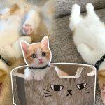 รู้กับ 'Chata' นุ้งแมวจากญี่ปุ่นผู้มีท่านอนแปลกๆ แต่น่ารัก จนมีคนขอเป็นทาสเพียบ
