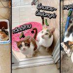 แมวเห็นว่าหญิงสาวใจดีต้อนรับ มันจึงพาแฟนมาอาศัยกินข้าว…และหอบลูกมาอยู่ด้วย!!