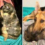 ครอบครัวตั้งใจหาบ้านใหม่ให้แมวจร แต่หมาที่เลี้ยงไว้ติดมันมาก เลยต้องเลี้ยงด้วยกัน