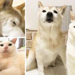 เชิญพบเรื่องราว ของแมว Ku ผู้อยู่ดูแลหมาความจำเสื่อม Shino จนลมหายใจสุดท้าย