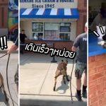 ปฏิกิริยาของ 'สุนัข K9' เมื่อคู่หูพาไปกินไอศกรีม ตื่นเต้นสุดขีดจนลืมไปเลยว่าเป็นตำรวจ