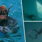 ปลากระเบนยักษ์ว่ายน้ำตรงมาหามนุษย์ เพื่อขอให้พวกเขาช่วยดึงตะขอที่ติดตัวอยู่